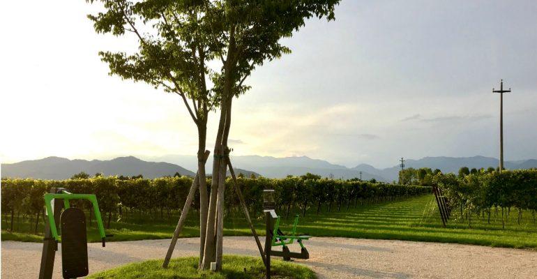 Correre e allenarsi tra le uve del Prosecco: in Veneto la palestra si fa in vigna