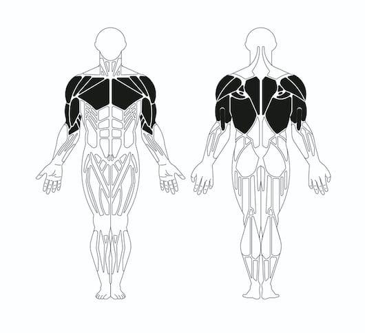 Horizontal Traction Disabili - Muscolatura