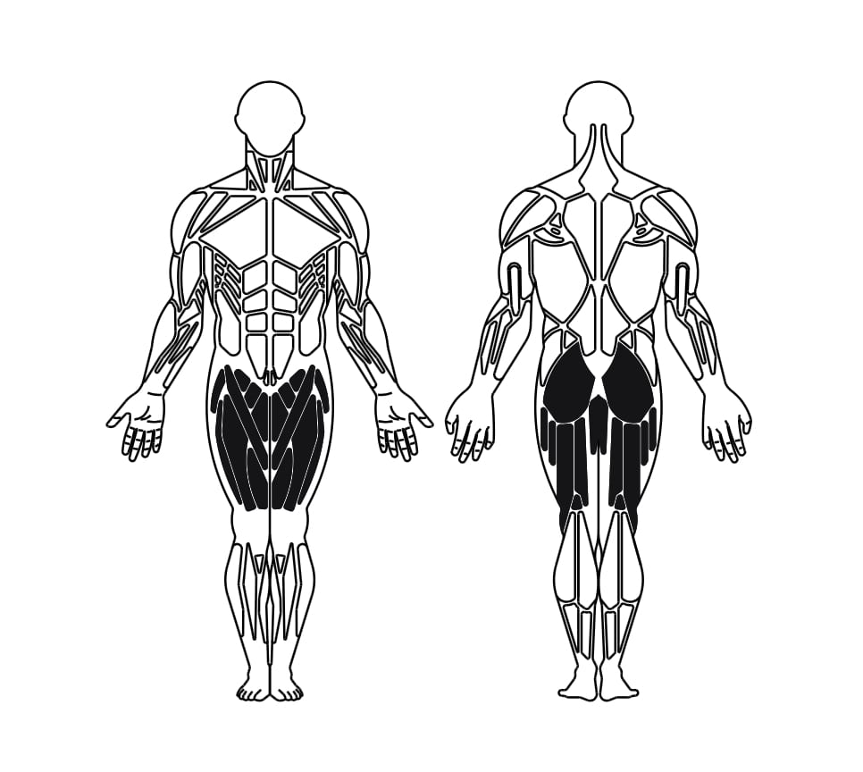 Step 3 altezze - Muscolatura